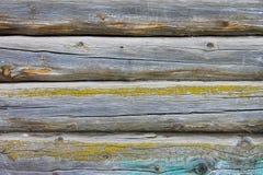 Ein stilvoller Weinlesehintergrund: eine Holzhauswand hergestellt von einem Strahl des gelben Mooses umfasst mit blauer Farbe Lizenzfreies Stockbild