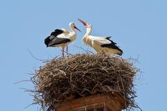 Ein Storchpaar in einem Nest Stockfotografie