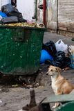 Ein Straßenhund, der am Abfallhaufen, Neu-Delhi, Indien sitzt lizenzfreie stockfotos