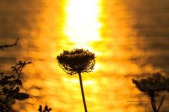 Ein Strahl des Sonnenlichts Lizenzfreies Stockfoto