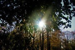 Ein Strahl des Sonnenlichts in den Bäumen Stockfotografie