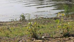 Ein Strand auf der Donau stock video footage