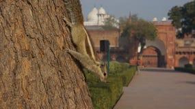 Ein Streifenhörnchen auf einem Baumstamm Lizenzfreies Stockfoto