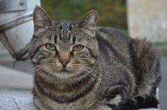 Ein Streukatzenabschluß oben Stockfotografie