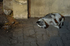 Ein streunender Hund in Bali Lizenzfreies Stockbild