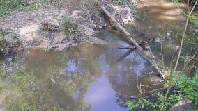 Ein Strom des Wassers im tiefen Holz stock video footage