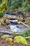 Ein Strom durch den Regenwald Stockfoto