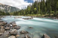 Ein Strom in Yoho National Park British Columbia, Kanada Lizenzfreies Stockfoto