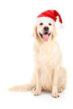 Ein Studio schoss von einem Hund, der einen Weihnachtshut trägt Stockbild