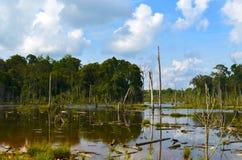 Ein Sumpf und ein grüner Wald an einem sonnigen Tag Stockbilder