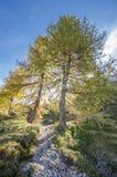 Sonnenschein in den Alpen Lizenzfreie Stockbilder