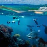 Ein Surfer und ein wilder Haifisch Unterwasser Lizenzfreie Stockfotografie