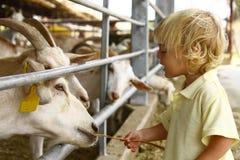 Ein Tag am Bauernhof Stockfoto