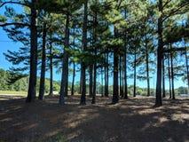 Ein Tag im Park lizenzfreie stockfotografie