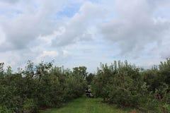 Ein Tag am Obstgarten Lizenzfreies Stockfoto