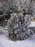 Ein Tannenbaum bedeckt mit Schnee in der Winterzeit Lizenzfreie Stockbilder