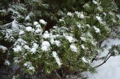 Ein Tannenbaum bedeckt mit Schnee im zeit- Stadtbild des Winters Lizenzfreie Stockbilder