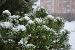 Ein Tannenbaum bedeckt mit Schnee im zeit- Stadtbild des Winters Stockfotografie