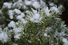 Ein Tannenbaum bedeckt mit Schnee im zeit- Stadtbild des Winters Lizenzfreie Stockfotos
