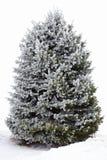Ein Tannenbaum im Reif Lizenzfreies Stockfoto
