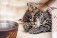 Ein Tasse Kaffee nahe einer kleinen gestreiften Katze, die unter einem wa schläft lizenzfreies stockbild