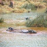 Ein Teich I Lizenzfreie Stockbilder