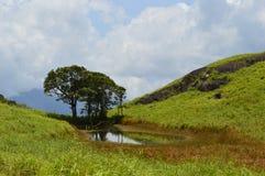 Ein Teich im Dschungel Stockbilder