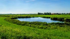 Ein Teich im flachen Land eines Landwirtfeldes nahe dem Veluwemeer Lizenzfreies Stockfoto