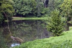 Ein Teich im Sommer Stockfoto