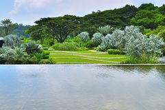 Ein Teich mit dem üppigen Grün am Hintergrund Lizenzfreie Stockbilder