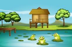 Ein Teich mit drei spielerischen Fröschen Lizenzfreie Stockfotos
