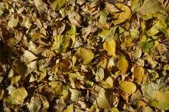 Ein Teppich des Herbstlaubs contrasty stockbild
