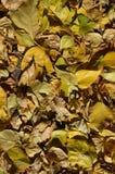 Ein Teppich des Herbstlaubs summte contrasty laut stockbilder