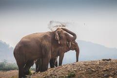Ein thailändischer Elefant wirft Staub Stockfotos