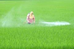 Ein thailändischer Landwirt sprüht Insektenvertilgungsmittel auf dem Gebiet Stockfotografie