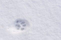 Ein Tierabdruck im Schnee Lizenzfreies Stockbild