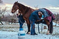 Ein Tierarzt, der ein braunes reinrassiges Pferd, Papillomasabbauverfahren mit cryodestruction, in einer Ranch im Freien behandel stockbilder