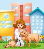 Ein Tierarzt, der um Hund sich kümmert Lizenzfreies Stockbild