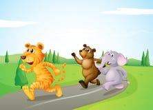 Ein Tiger, ein Bär und ein Elefant, die entlang die Straße laufen stock abbildung
