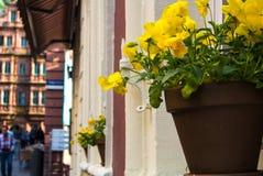Ein Topf mit gelben Pansies am Fensterbrett eines alten Hauses an der alten Stadt von Heidelberg Lizenzfreie Stockfotografie
