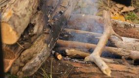 Ein Topf Waldtee wird auf das Feuer gesetzt Nahaufnahme stock video footage