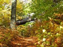 Ein Tor zum Holz Lizenzfreie Stockbilder