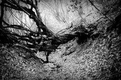 Ein toter Baum Stockbild