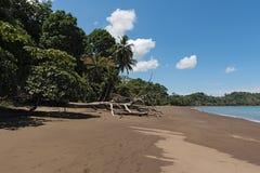 Ein toter Baum auf dem Strand von Drake Bay, Costa Rica Stockbild