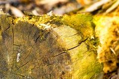 Ein toter Baum am Strand Stockbild
