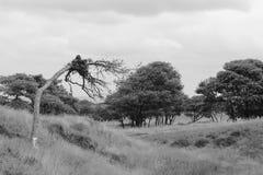 Ein toter Baum unter dem Leben Stockfoto
