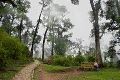 Ein Tourist, der nebelhaften Nationalpark genießt Stockbild