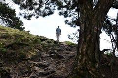 Ein touristischer Mann, der zum Hügel im Wald geht Stockfotos