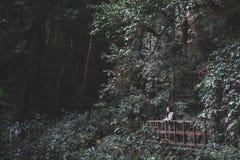 Ein touristisches Trekking der schönen Asiatin im tropischen Wald stockfotos