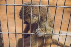 Ein trauriger Affe schloss in einen Käfig als Gefangenes zu Lizenzfreie Stockfotografie